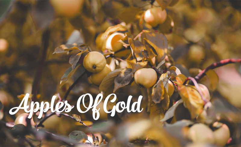 apples of gold 2015